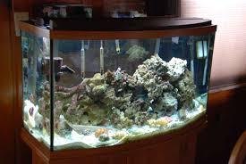 samples of salt water fish tanks only at feldman u0027s aquarium