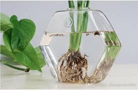 hexagon glass wall planter terrarium glass wall fishbowl desktop