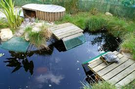mon projet de bassin Images?q=tbn:ANd9GcTwLIifGpRSka1XJMrxbWvtpXUwhFcOkwjc3icvSda_dwrCYenhq_AE_gmw