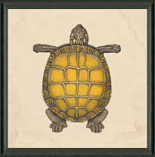 Sea Turtle Home Decor Creative Stylish Sea Turtle Home Decor 25 Best Ideas About Sea