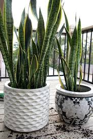106 best in house plants images on pinterest house plants