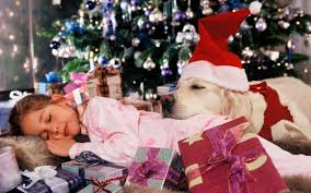 thinking about giving a puppy to someone this christmas think again