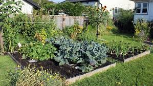 Planning A Raised Bed Vegetable Garden by Converting Lawn Into Raised Garden Beds Without Waste