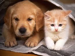 Pet Blog - Só mais um site WordPress