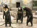 Sun Bear As A Pet | Plus Pets - Dogs, Cats, Puppies, and much more.