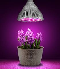 light bulb best grow light bulbs for indoor plants best plant