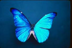 simple butterflys wing