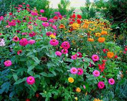 هدية لكل عضو Fleurs