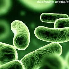 VIDA EN EL ESPACIO Bacterias%2Bverdes%2Bluminosas-internet