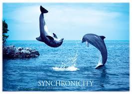 http://t2.gstatic.com/images?q=tbn:Kzs6KHaiBxRhpM:http://www.posters.cz/plakaty/plakaty-full-synchronicity-delfini-2275.jpg