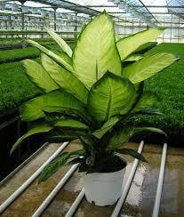 أنواع نباتات الظل اختاري مايناسب ذوقك DETA-8.jpg