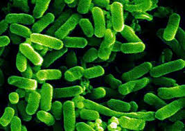green design, e.coli,