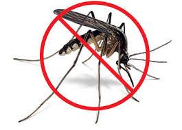 external image no_mosquito.jpg