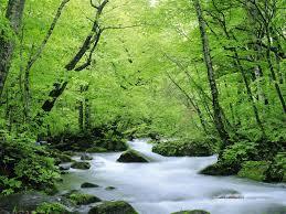 عکس جنگل و رودخانه