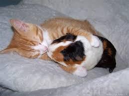 صور قطط كيوت 2016 ، صور رومانسية للحيوانات 2016 ، اجمل قطط برية 251356askgw1.jpg