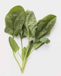 الخضروات a230c9ee6b.jpg