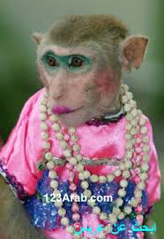 [Image: monkey12.jpg?w=310&h=450&t=1]