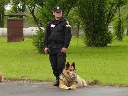 http://t2.gstatic.com/images?q=tbn:SgGO56xORa4sBM:http://www.resinet.pl/_foty_news/1774_policja-psy.jpg
