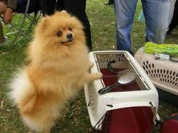 أصغر واكبر الكلاب في العالم وأجملها