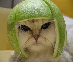 http://t2.gstatic.com/images?q=tbn:TahKt9Nb_ogrzM%3Ahttp://www.costumecats.com/wp-content/uploads/2007/05/melon.jpg