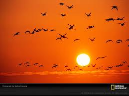 أنتظرتك orange-birds-rosing-