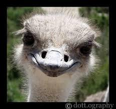 ostrich_oo_by_polkadot_tragedy.jpg