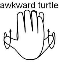 Screw the Awkward Turtle,