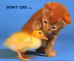 dont cry&ampt1