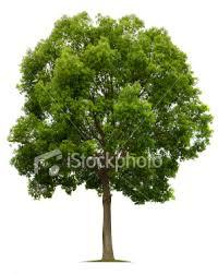 عکس درخت - مخصوص طراحی