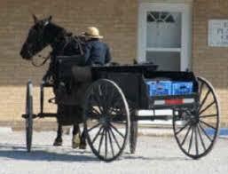 Horse and Buggie--http://www.google.com/imgres?imgurl=http://i.da...s%3Disch