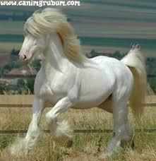 قسم هواة الخيول