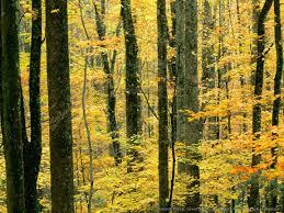 عکس جنگل زرد رنگ پاییزی