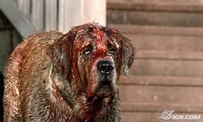to say if Cujo is expertly