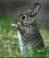 Algo tierno tierno Conejo-bebe