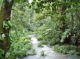 rain forest the understory