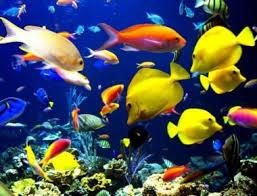 external image peces.jpg