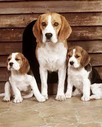 Personalizar avatars y firmas. Lyndon-B.-Johnson-Him-and-Her-beagles_slideshow_image