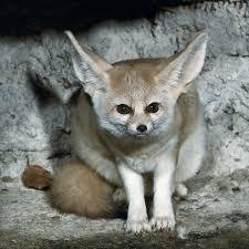 إليكم صور الحيوان الدي تشتهر به الجزائر وهو رمز لها 15004628