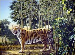 The Hidden Tiger Optical
