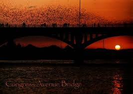 Congress Avenue Bridge - Bats - Attraction - 100 Congress Ave, Austin, TX, 78701, US