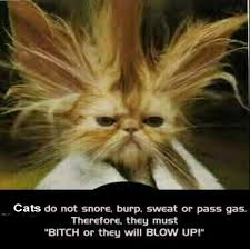 http://t2.gstatic.com/images?q=tbn:qjMKI2jtsYh4dM:http://rulingcatsanddogs.com/contents/funny-pics/original/silly-cats-saying-about-blowing-up-kitty-comedy-pic.jpg