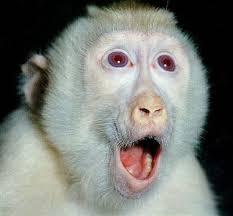 Monstros Normais Macaco%2Breveillon