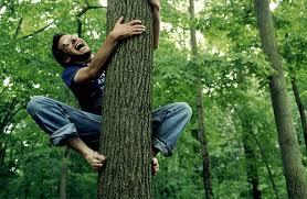 climb,بالارفتن از درخت