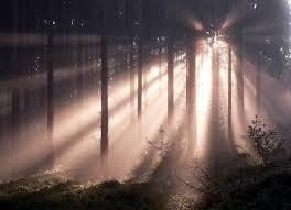 Und Gott sprach: Es werde Licht - und es wurde Licht. - Seite 5 Licht_im_wald