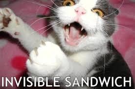 Pazzi come gatti -cats-are-crazy-1
