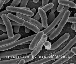 E.coli research