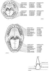 pictures tooth crown