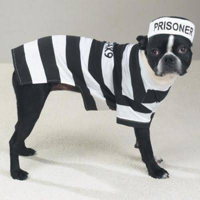 Prison Pooch Dog Costume XX Large