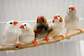 علمتني العصافير
