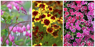 Flowers For Flower Beds by Best Perennial Flowers Ideas For Easy Perennial Flowering Plants